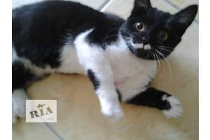 Симпатичный котик-муркотик с белыми усами