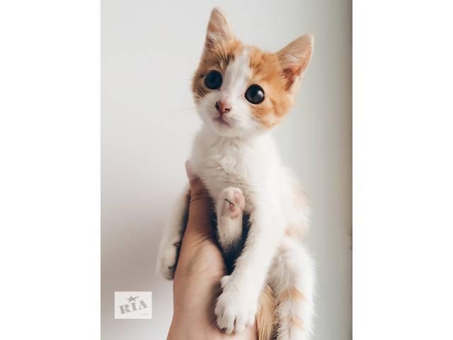 бу Терміново! Котенята безкоштовно в Тернополе