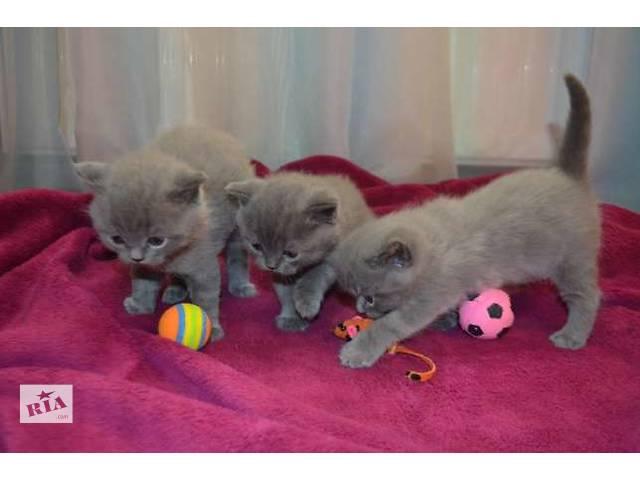 купить бу Трое замечательных плюшевых котят в Тернополе