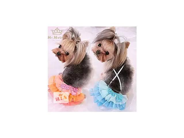 Трусы юбка одежда для собак- объявление о продаже  в Днепре (Днепропетровске)