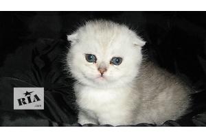бу Кошки, коты, котята в Днепропетровске Вся Украина