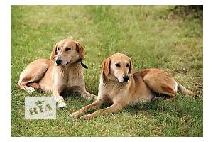 фото і ціна собак