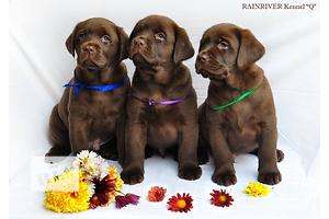 бу Собаки, щенки в Запорожье Вся Украина