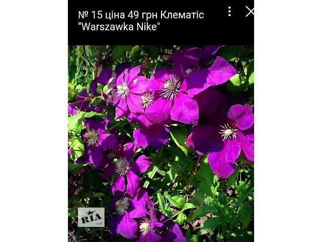 бу Многолетние садовые цветы почтой! в Сумах