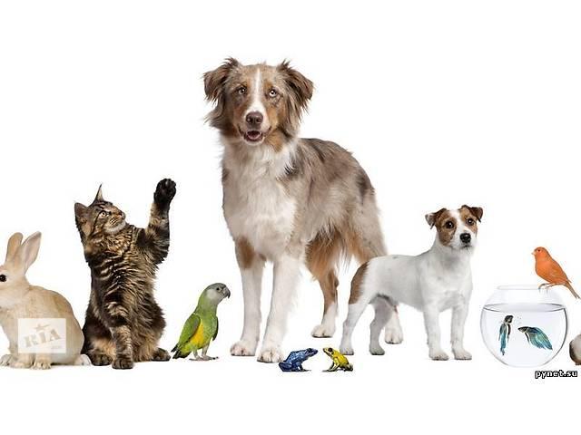 бу Уход за домашними животными на время Вашего отпуска в Ровно