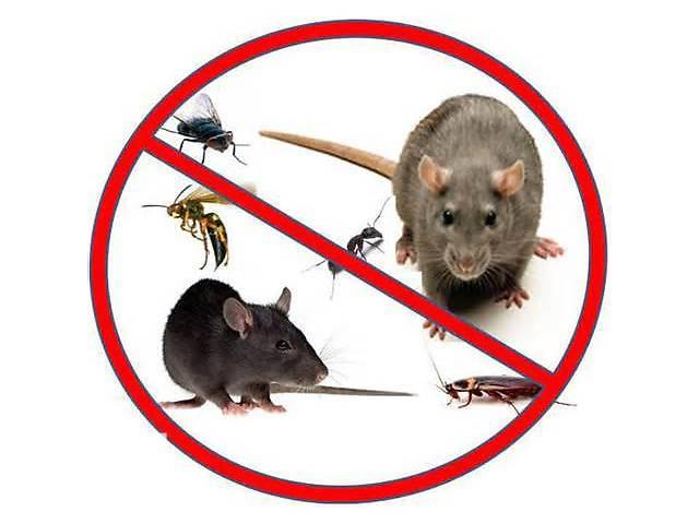 купить бу Уничтожение грызунов, насекомых(клопы тараканы блохи др.) ,дезинфекция в Донецкой области