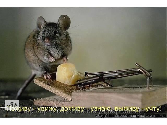 Уничтожение крыс, мышей и полевых грызунов-вредителей- объявление о продаже  в Виннице