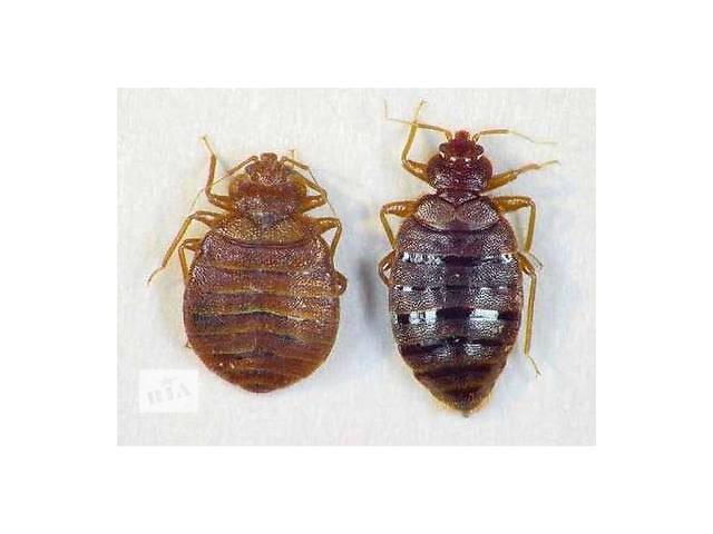 уничтожение  всех видов насекомых и грызунов  в Виннице и Винницкой обл.- объявление о продаже  в Виннице