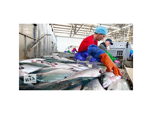 продам Розпочався набір на рибний завод у Норвегії бу  в Україні