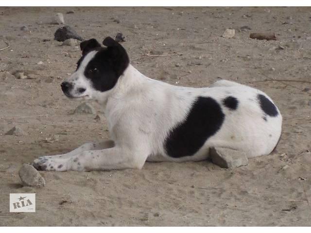 бу Вам нужен крупный щенок-охранник?  в Киеве