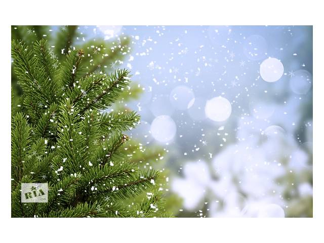 продам Вечнозеленые растения ,зелёная ель бу в Киеве