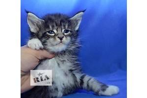 Супер котята Мейн-кун! Ласковые Гиганты!!