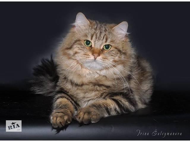 продам Великолепный чистокровный сибирский кот бу в Киеве