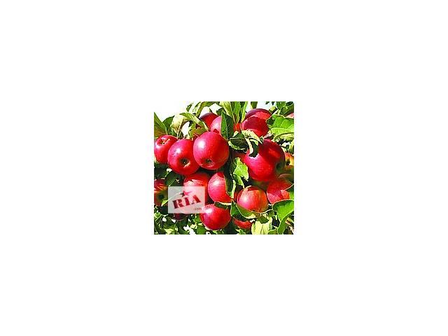 большой выбор плодовых деревьев- объявление о продаже  в Сокирянах