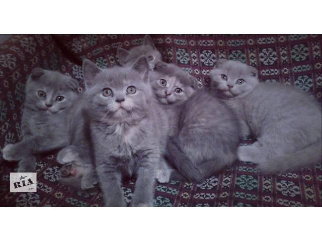 продам Веселі грайливі кошенятка! бу в Хмельницком