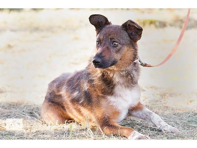 бу Весточка - небольшая собачка в Киеве