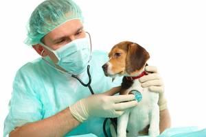 Ветеринарная помощь