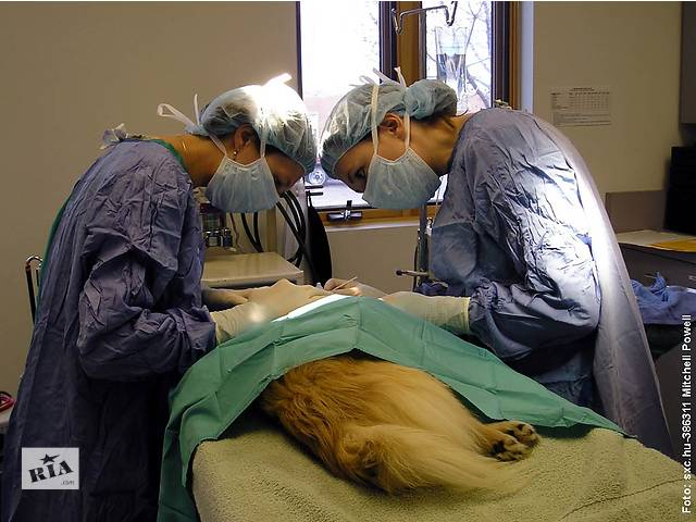 купить бу Ветеринарная помощь,вызов ветеринара на дом.Харьков  в Украине