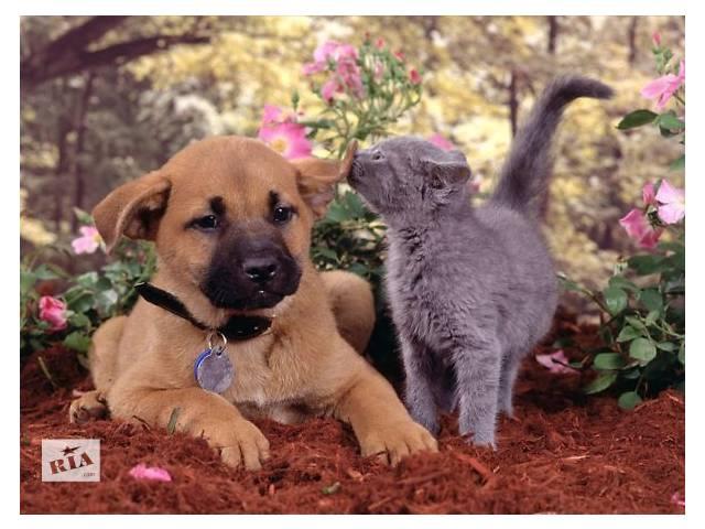 купить бу Ветеринарная помощь в Харькове