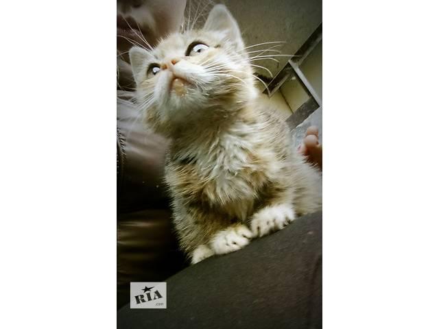 купить бу Отдам котенка в добрые ручки в Львове