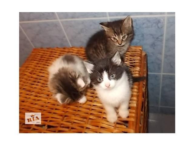 купить бу Віддам котенят в хороші руки в Ровно
