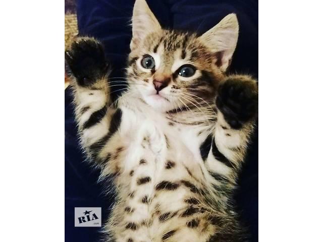 купить бу Отдам котика в добрые руки в Луцке