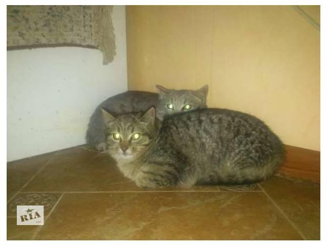 Віддам в добрі руки двох гарних котят- объявление о продаже  в Тернополе
