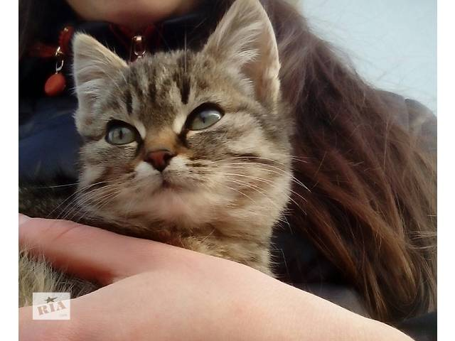 продам Отдам в добрые руки котенка бу в Дрогобыче
