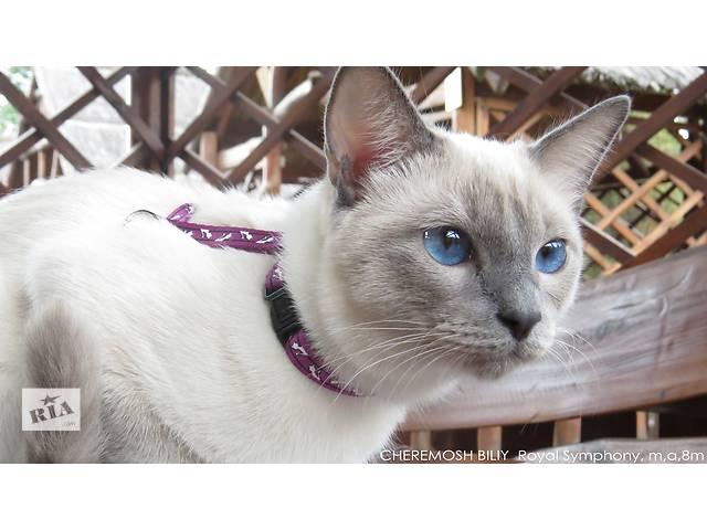 бу Волшебный Тайский котенок. Элита породы. в Днепре (Днепропетровске)