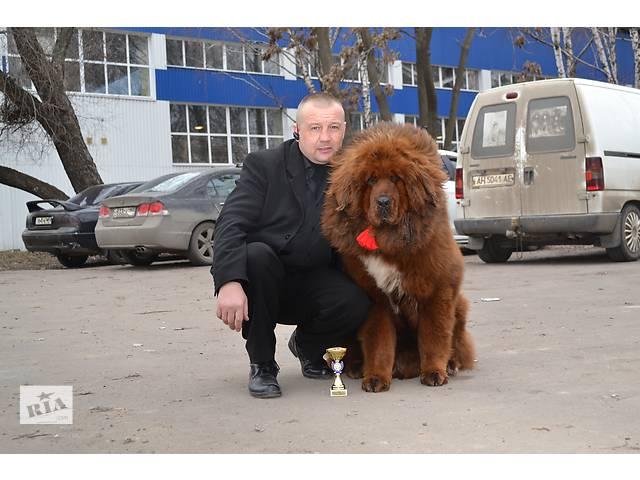продам Воспитание и дрессировка собак. Хендлинг. Физ.подготовка собак. бу в Донецкой области