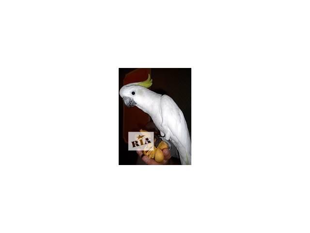 купить бу Все для попугаев. Продажа - Попугаи, Клетки, Вольеры, Корма для попугаев.  в Украине