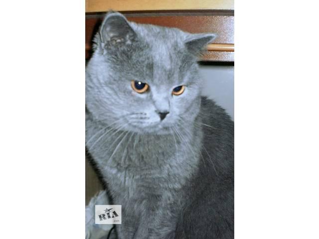 купить бу Вязка с британским котом в Киеве