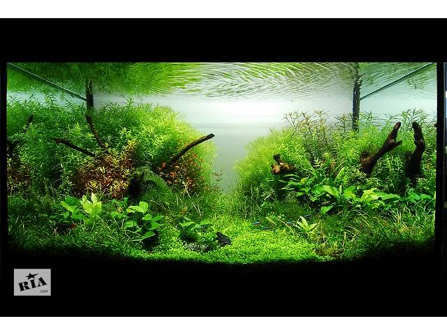 купить бу Изготовление аквариумов. На фото мої роботи в Виннице