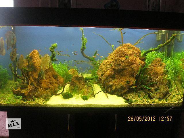 бу Продаю морские кораллы для дизайна аквариумов!!!!Изготовление аквариумов. На фото мои работы в Виннице