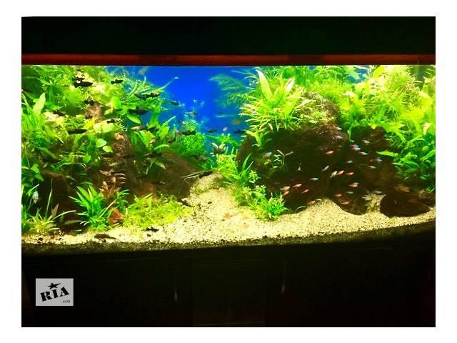 купить бу Продаю морские кораллы для дизайна аквариумов!!!!Изготовление аквариумов. На фото мои работы в Виннице