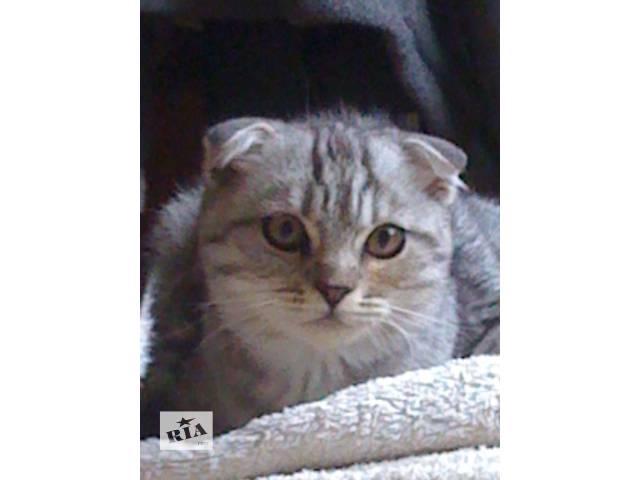 продам Вискасный котик бу в Киеве