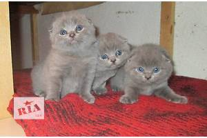 Висловухі кошенята