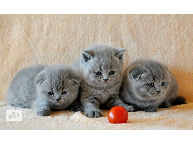 продам Вислоухие котята принесут тепло и уют в Ваш дом. бу в Донецке