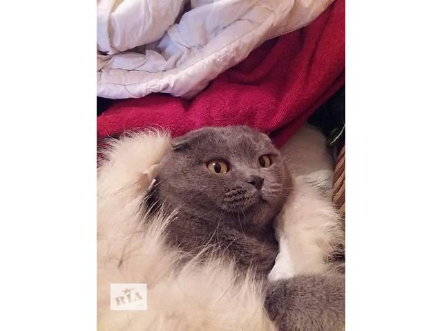 купить бу Вислоухий ласковый котик Пиксель ищет хозяев в Киеве