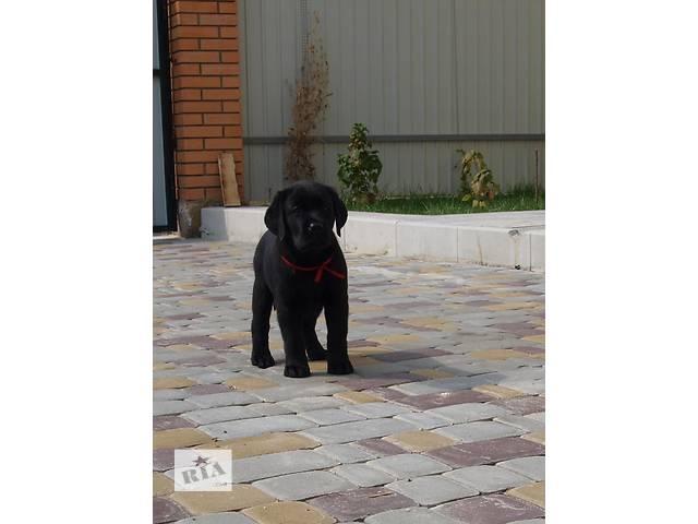 купить бу Высокопородные черные щенки Лабрадора ретривера! в Киеве