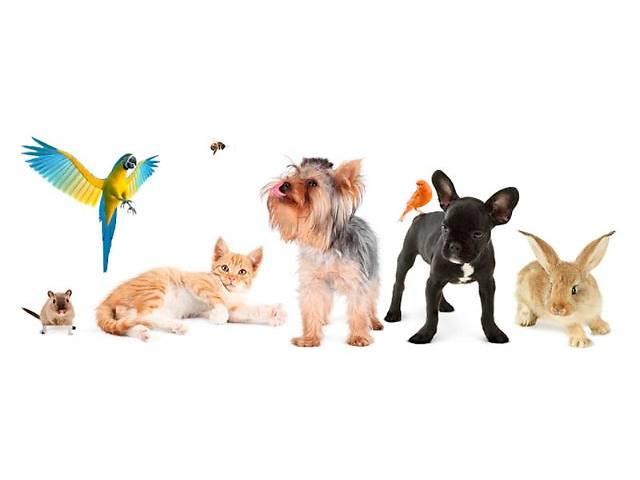 продам Вызов ветеринара на дом Харьков бу в Харькове