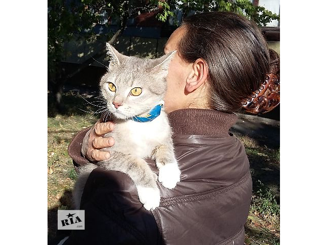 продам Я - кот. Замечательный и обаятельный бу в Киеве