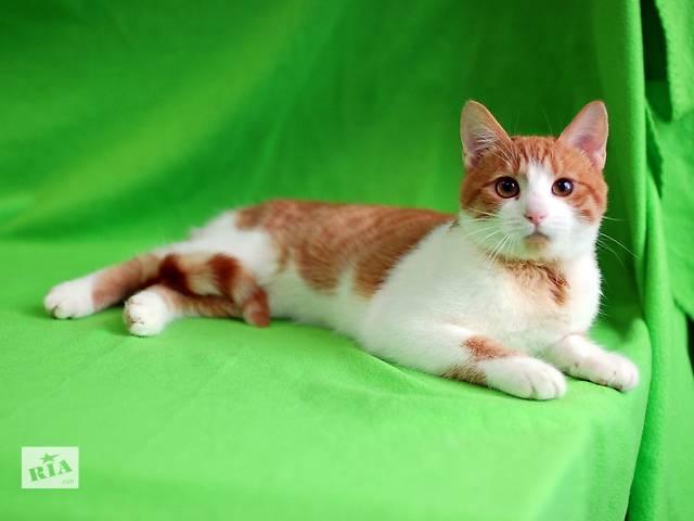 купить бу Ярофей, семимесячный кастрированный котик. в Киеве