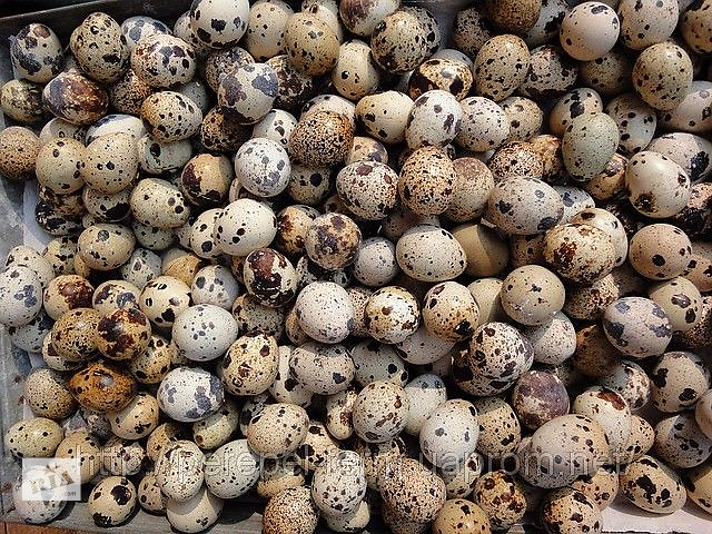 Яйца перепела пищевые диетические, перепелиные яйца, всегда свежие- объявление о продаже  в Бахмуте (Артемовске)