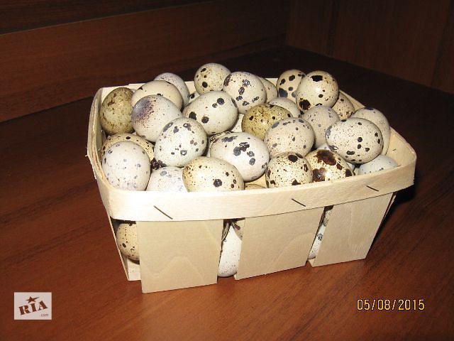купить бу Яйца перепелиные пищевые столовые Днепропетровск-доставка в Днепре (Днепропетровск)