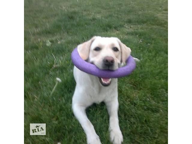 продам Инивидуальная дрессировка+коррекция поведения собак-150грн/занятие бу в Днепропетровской области