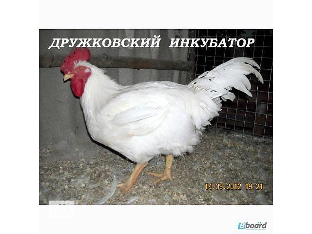 инкубатор автомат на 1600 яиц- объявление о продаже  в Дружковке