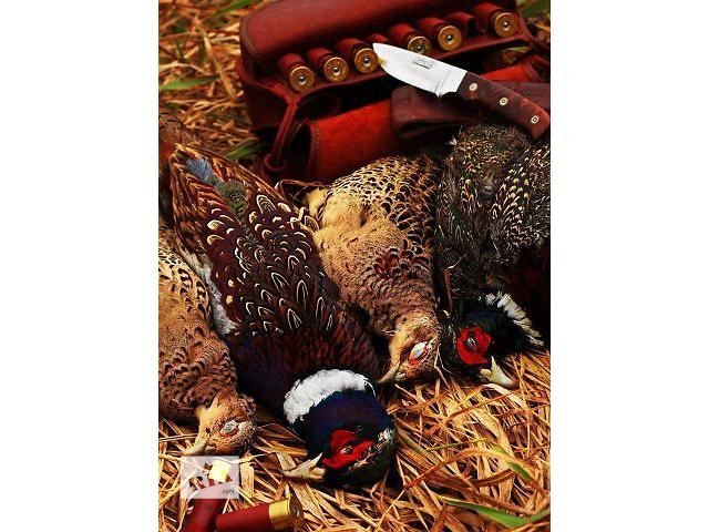 продам Инкубаційне яйце фазана  бу в Звенигородке