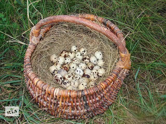 купить бу Инкубационное яйцо в Черкассах