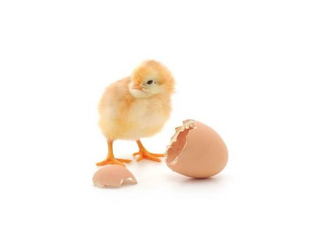купить бу Инкубация яиц с/х птицы  в Украине